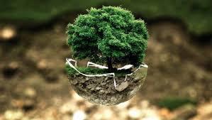 Master educación medioambiental